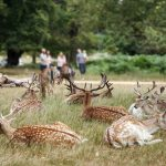Why Richmond Park Is A Must Visit This Summer