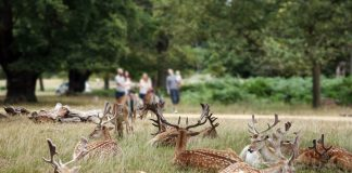 Richmond Park in summer